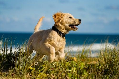 Hundegesundheit: 10 Dinge, die du unbedingt wissen solltest!