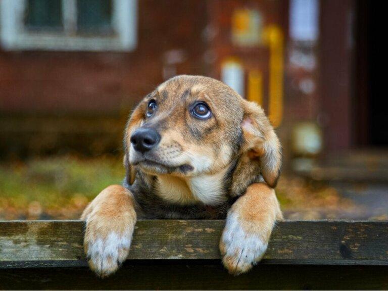 Verlassene Hunde: 70 % der weltweiten Hundepopulation